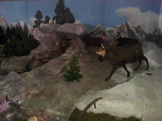 Latteria di Livigno: Diorama alpino 2