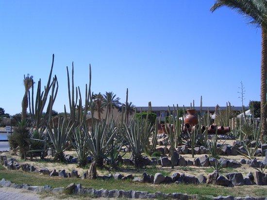 Jasmine Village Hotel : кактусы