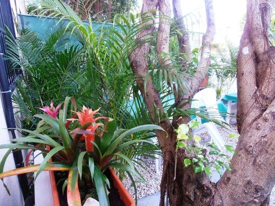 Iguanaplaya B&B: Jardin