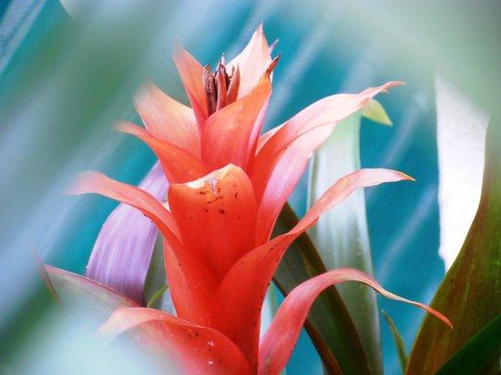 Iguanaplaya B&B: Flor en el jardin