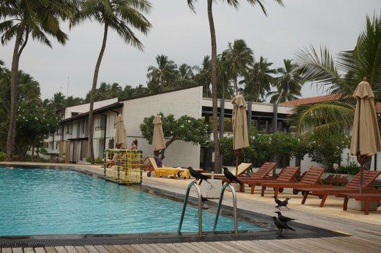 AVANI Kalutara Resort : Pool