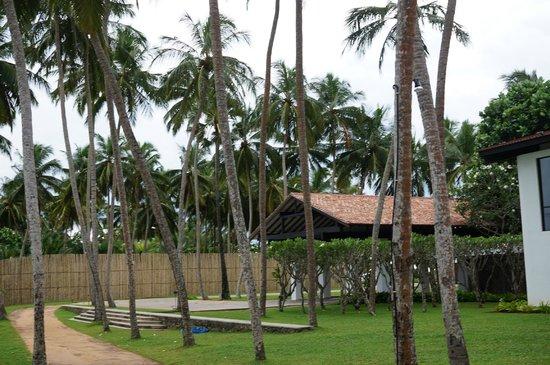 AVANI Kalutara Resort : Garden