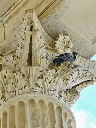 La Maison Carrée : A pigeon eyes passersby from the top of a Corinthian column at the Maison Carree