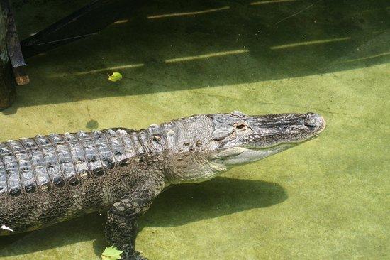Pittsburgh Zoo & PPG Aquarium: Look at this big guy!