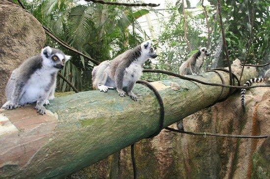 Pittsburgh Zoo & PPG Aquarium: Inside the Monkey House