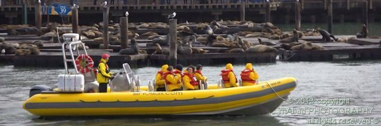 Pier 39 Sea Lions & Bay Voyager... get up close!