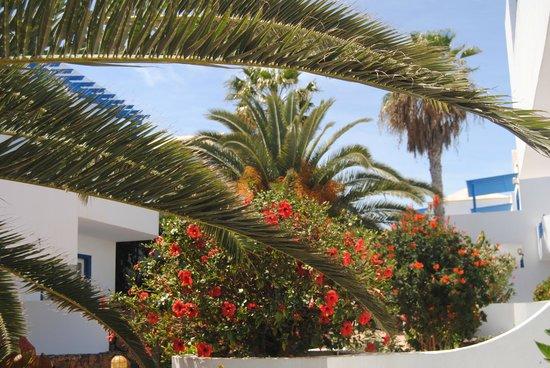 Aparthotel Paradise Island : La végétation de l'hotel Hibiscus , palmiers dattiers...