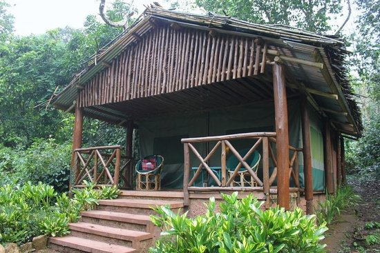 Kibale Forest Camp : tented room