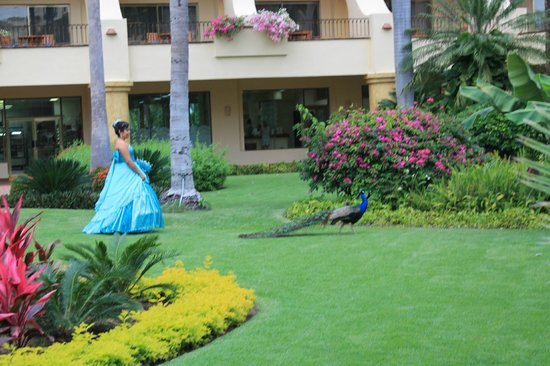 Velas Vallarta : The Young Lady and her Guest were both lovely in Azure Blue.