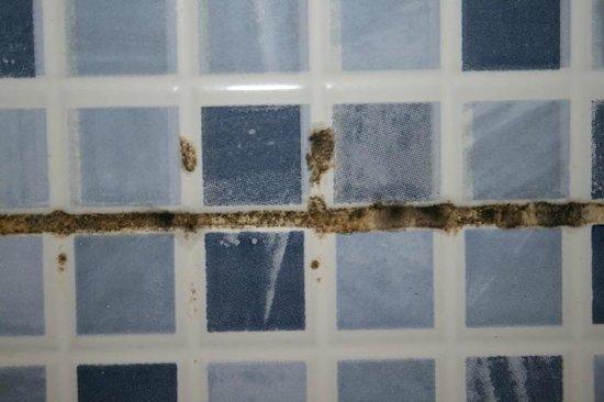 Varca Palms Beach Resort: Badfliesen