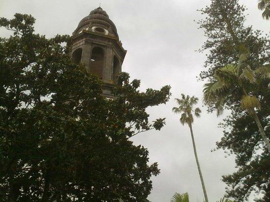 Santa Iglesia Catedral: Torre, palmera y araucaria, compiten por tocar el cielo.