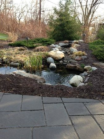 Clarion Inn & Suites: Fish pond