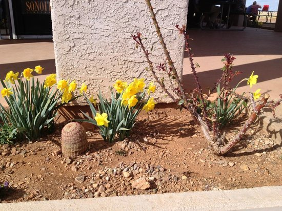 Sonoita Vineyards greets you with this lovely desert flora