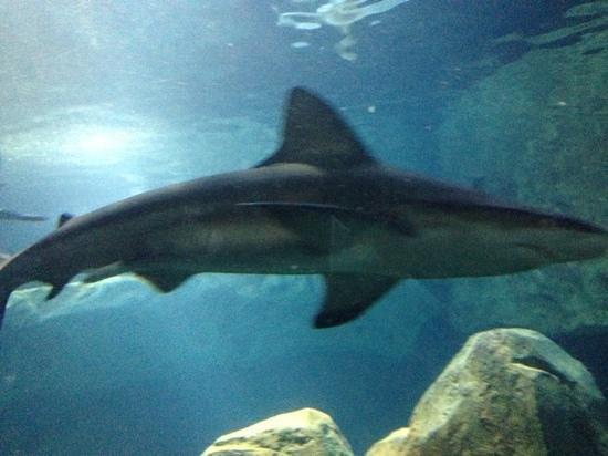 Agua Viva Picture Of Adventure Aquarium Camden
