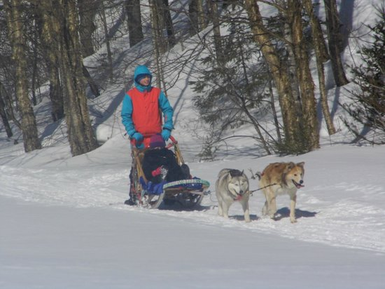 Escapade Laurentides Canin: Local family come  all group size , this one where 15