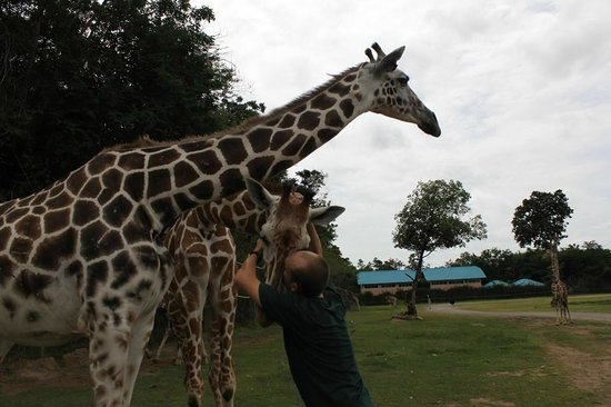 Bo Phloi (Kanchanaburi) Thailand  city photos : ... them this picture Safari Park Open Zoo, Kanchanaburi TripAdvisor