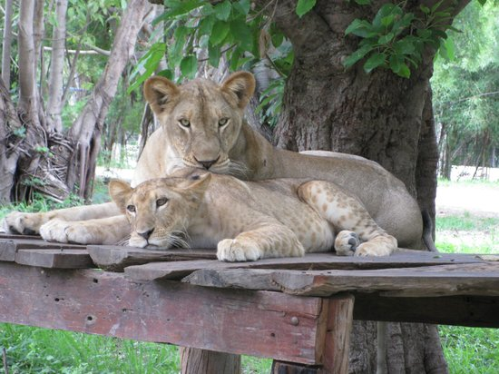 Chilling couple - Picture of Safari Park Open Zoo, Kanchanaburi - TripAdvisor