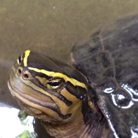 Alamanda Accommodation: Little turtle pond
