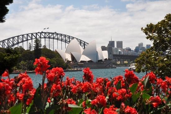 Royal Botanic Gardens : новогодний Сидней