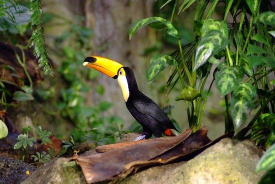 Loro Parque: 1000s of exotic birds