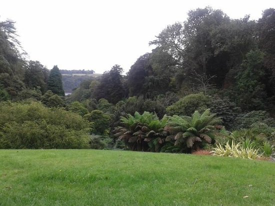 Trebah Garden : mixed foliage canopy view down to helford river