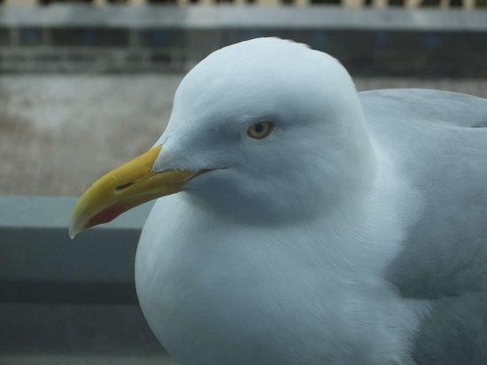 Ibis Saint Malo Plage: Seagull