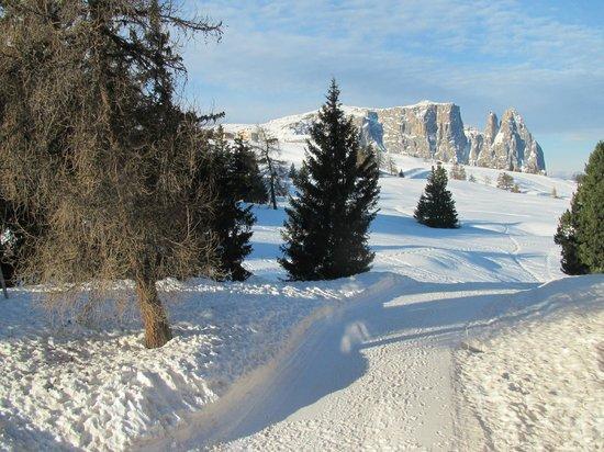 Hotel Steger-Dellai: Skipiste und Langlaufloipe direkt vor dem Hotel