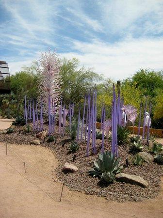 Strange Cacti Picture Of Desert Botanical Garden Phoenix Tripadvisor