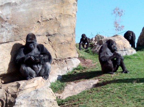 Bioparc Valencia: Selva de los gorilas