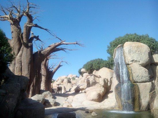 Bioparc Valencia: Habitat de los elefantes africanos