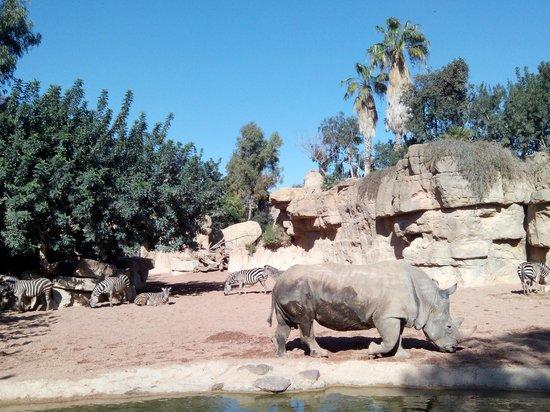Bioparc Valencia: Habitat sabana africana, cebras y rinoceronte