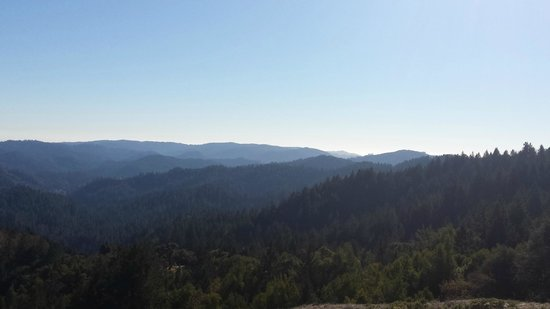 Armstrong Redwood State Reserve: Looking west 3/4 of the way to Bullfrog Pond