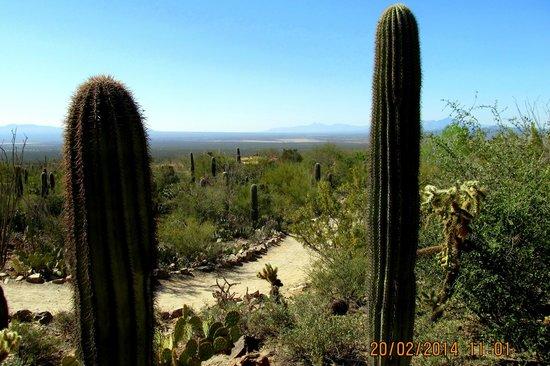 Museo del Desierto Arizona-Sonora: Vista