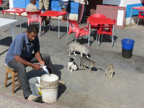 Torre de Belem: Cats waiting for a meal