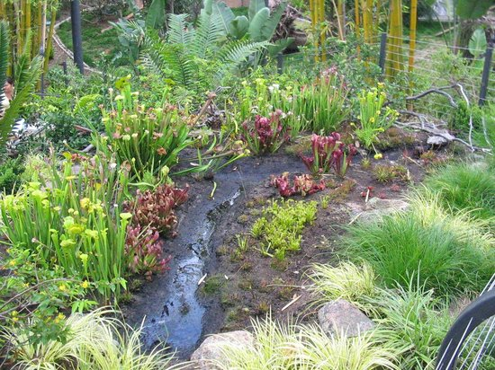 San Diego Zoo : carnivorous plants exhibit at the zoo