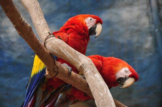 La Aurora Zoo: Fhoto Gabriel Rodriguez