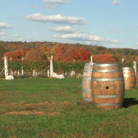 Gouveia Vineyards: view