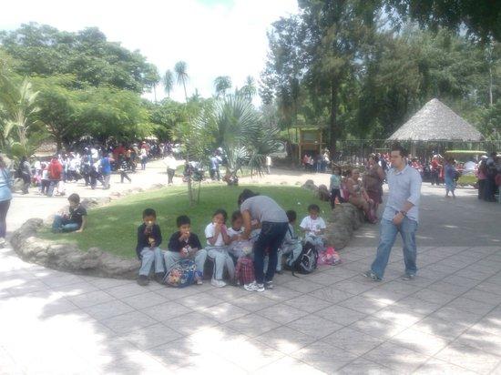 La Aurora Zoo: 3