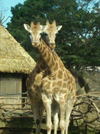 La Aurora Zoo: 258