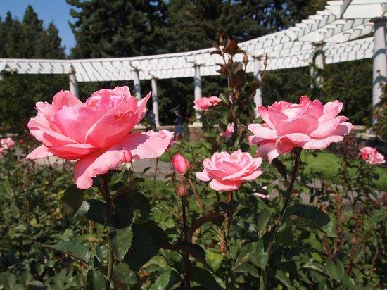 Manito Park: Rose Gaden