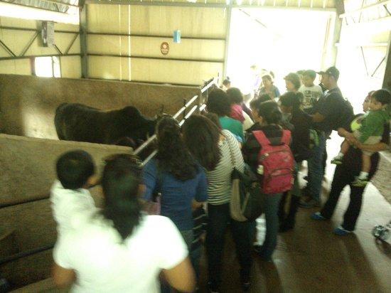 La Aurora Zoo: 5