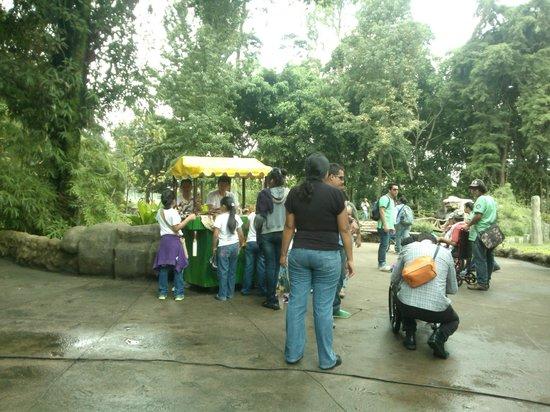 La Aurora Zoo: 6