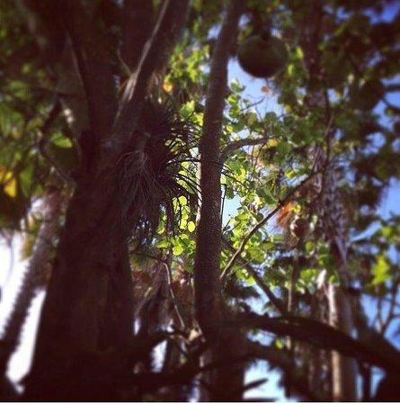 The Standard, Miami : The wood walkway