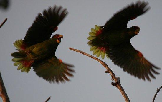Star Mountain Jungle Lodge: bird watching