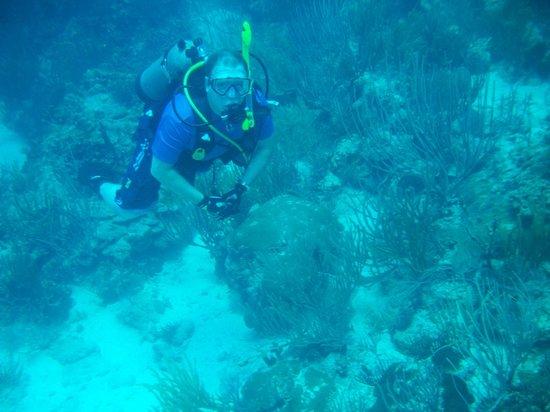 Sea Ventures Dive Center: 80 degree water - no wetsuit needed