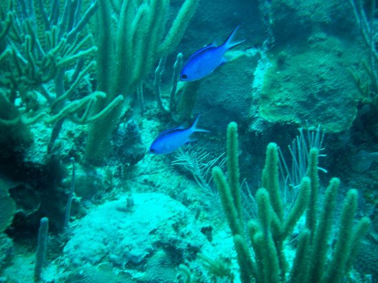 Sea Ventures Dive Center: local residents