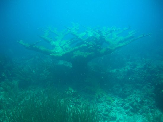 Sea Ventures Dive Center: Interesting coral formation - a 'lone oak in a field'