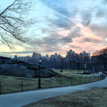 Central Park in the late afternoon