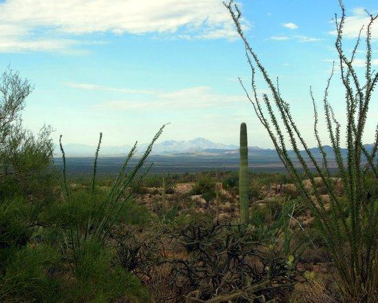 Arizona-Sonora Desert Museum : view from Desert Loop Trail