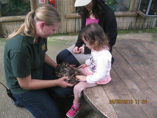 Tropical Butterfly House, Wildlife & Falconry Centre: Juna with a snake
